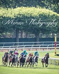 Widener Turf Course (EASY GOER) Tags: park horse sports canon track belmont racing 5d races equine thoroughbreds belmontpark markiii 5dmarkiii