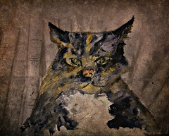Gerard (patrick.verstappen) Tags: inspiration texture animal digital cat painting photo image pat imagine inspirational gerard textured picassa twitter ipernity d7100 pinterest ipiccy picmonkey