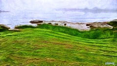 Grassy Coastline (photo fiddler) Tags: grass june fog coast village atlantic prospect 2016