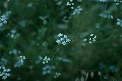 Fields (Eleonora Sacco | Pain de Route) Tags: flowers field fields nature impruneta tuscany toscana italy hills vineyards olive fiori natura