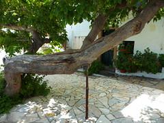 Σκυρος Χωρα P1200246 (omirou56) Tags: σκυροσ δεντρο σκια πλατεια νησι ελλαδα 43 panasoniclumixdmctz40 παραξενο skyros island greece tree shadow square