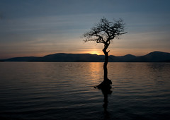 Millarochy sunset (t_m_focus) Tags: sunset mountains tree water landscape bay scotland loch submerged lomond balmaha millarochy