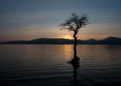 Millarochy sunset (t_m_focus) Tags: sunset mountains tree water landscape bay scotland loch submerged lomond balmaha millarochy