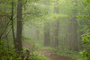 Morning Mist (Conrad Kuiper) Tags: mist green leaves fog canon outdoor sigma 105mm greatphotographers rockpaper colour2 7dmkii rockpaperexcellence