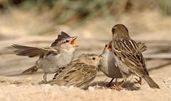 (mohd alsulaiti) Tags: hot birds canon google aljazeera top explore arab nationalgeographic natgeo 2015  nationalgeographicmagazine    topshots     canon5diii 5diii nationalgeographicbirds      instagramenjoyqtr