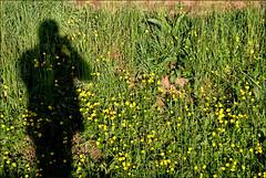 La mia ombra (Maulamb) Tags: verde ombra erba ranuncoli