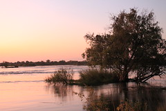Livingstone, Zambia (MJR96) Tags: africa sunset red wild tree river zambia zambezi
