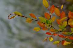 """colors_of_leaves • <a style=""""font-size:0.8em;"""" href=""""https://www.flickr.com/photos/97058259@N02/18090523505/"""" target=""""_blank"""">View on Flickr</a>"""
