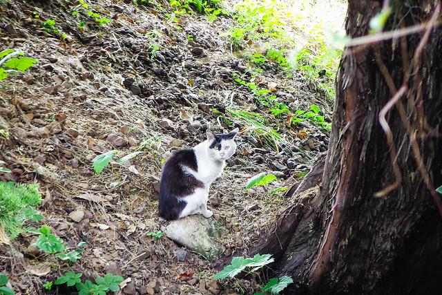 Today's Cat@2015-06-02