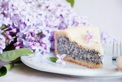 Poppy Seed Cake (letterberry) Tags: morning food white flower cake breakfast dessert yummy purple rustic violet plate gourmet lilac homemade slice pastry copyspace poppyseed foodanddrink baked curd refreshment poppyseedcake sweetfood sweetpie