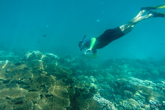 Snorkelling Horseshoe Reef, Lord Howe Island (NettyA) Tags: camera man water coral person underwater australia clear nsw housing snorkelling day8 unescoworldheritage lordhoweisland thelagoon 2016 lhi resistant platecoral ewamarine janetteasche lordhoweforclimate