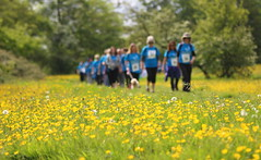 WalkforParkinsonsUK (Idreamofpies) Tags: uk blue money flower river walking sponsored cheshire riverside path meadows file chester single walkers challenge parkinsons buttercups raising walkforparkinsons httpswwwjustgivingcomkateknight16