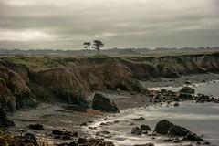 Coastal Trail Costanoa (clairehintze) Tags: longexposure cypresstrees nikond700