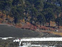 Reserva China Muerta (Mono Andes) Tags: chile mountainbike bicicleta bosque andes araucaria araucariaaraucana bicicletademontaa araucariaceae chilecentral regindelaaraucana reservanacionalchinamuerta