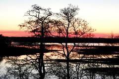 Serene evening (KaarinaT) Tags: trees sunset sky silhouette finland evening helsinki dusk stripes calm serene herttoniemi