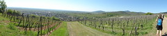 160505 Marche populaire Heiligenstein (Randalfino) Tags: panorama landscape pano alsace paysage marche barr balade 2016 heiligenstein mai16