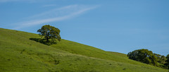 Hill View - Rolling Hills Open Space Park - Solano County - California - 26 March 2016 (goatlockerguns) Tags: california park county usa mountains west tree nature oak open natural space unitedstatesofamerica vacaville hills trail bayarea eastbay solano rolling fairfield vaca