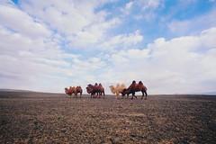 I love camels (The Gobi, Mongolia) #travel (wingilote) Tags: travel sky canon asia mongolia backpacking tamron camels gobi 17mm