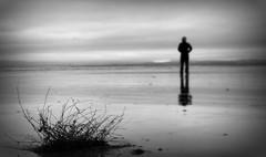 The Thing. Explore (eddieELM) Tags: ocean ireland sea blackandwhite bw man blur beach monochrome grass ed mono sand solitude dof picasa depthoffield explore shore figure lone donegal rossnowlagh irlanda irlande selfie donegalbay eddieelm