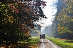Enjoying the scenery (charlottehbest) Tags: november autumn trees colours arboretum gloucestershire autumncolours westonbirt autumnal westonbirtarboretum 2015 charlottehbest