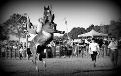 Filipe Vaz (Eduardo Amorim) Tags: brazil horses horse southamerica brasil criollo caballo cheval caballos cavalos pelotas pferde cavalli cavallo cavalo gauchos pferd riograndedosul pampa hest hevonen campanha brsil chevaux gaucho  amricadosul fronteira hst gacho  amriquedusud  gachos  sudamrica suramrica amricadelsur  sdamerika crioulo caballoscriollos criollos jineteada   americadelsud gineteada  crioulos cavalocrioulo americameridionale caballocriollo eduardoamorim cavaloscrioulos