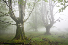 MISTY FOREST (Jesus Bravo) Tags: misty fog forest mood country basque gorbea gorbeia