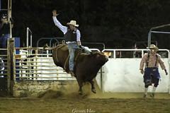 1C3A9754 (garrettmoss84) Tags: hawaii cowboy maui bull rodeo makawao