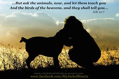 AskTheAnimals (Sedona Clearing House) Tags: shadow rescue dog pet love animal silhouette jack respect quote honor save bible wisdom jackmcafghan