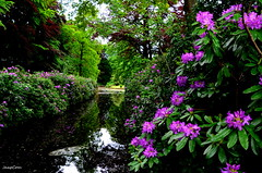 Garden Ijsselvliedt (JaapCom) Tags: flowers trees flower water fleurs garden natural gracht naturel wezep ijsselvliedt jaapcom