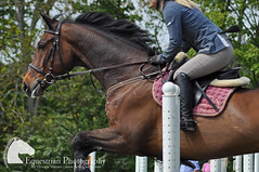 Showjumping (Vicktrr) Tags: show horses horse jumping native fife bull highland pony british hunter welsh harness cob calf gypsy coloured equestrian shetland champions equine agricultural calves clydesdale showjumping foal foals vanner 2015 drey workinghunter
