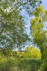 Lush and Green (GeminEye27) Tags: green spring photopainting topazclean pixelbenderoilpaint