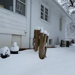 Anglų lietuvių žodynas. Žodis snow mushroom reiškia sniego grybų lietuviškai.