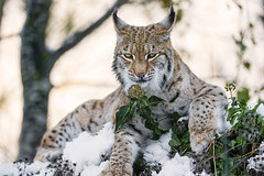 HD Images of the Wild Animals, Wallpapers and backgrounds - Part 1 (PhotographyPLUS) Tags: pictures graphics photos illustrations images stockphotos articles footage stockimage freephoto stockphotograph