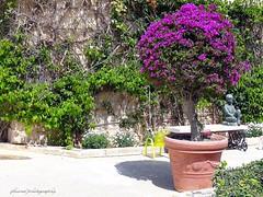 Palazzo Parisio & Gardens in Naxxar, Malta (jackfre2) Tags: city flowers trees plants beauty gardens island terrace malta pots inside splendid naxxar palazzoparisio palazzoparisiogardens