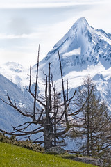 Bergfrhling im Zillertal (memories-in-motion) Tags: schnee nature canon landscape photography austria tirol sterreich spring iso400 air natur sigma berge grn alpen landschaft zillertal frhling 150mm bergfrhling canoneos7dmarkii 150600mmf563dgoshsm|sports