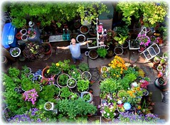 tending my container garden (milomingo) Tags: above plant man male green me garden myself botanical outdoor perspective container multicolored mygarden i