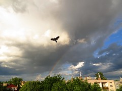 Encounter. (Marinyu..) Tags: sky storm bird clouds rainbow cloudy explore vihar madr szivrvny