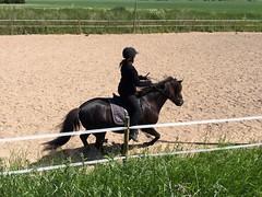 Lite galopp (Patrick Strandberg) Tags: horse sweden iphone hst stergtland icelandichorse islandshst vikingstad iphone6 eilifur nestalund