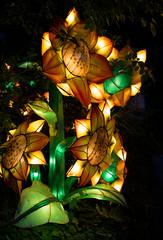 _DSC9524_2 (Elii D.) Tags: light fish flower animal night zoo monkey neon dragons lantern lampion dargon