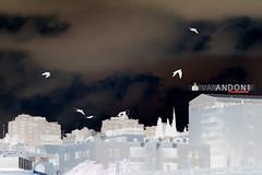 Negative Reflection Birds (Ivan Andoni [Photo&Art]) Tags: sky bird birds fly bluesky