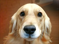 A Dogs Tale (The General Was Here !!!) Tags: dog pet pets film dogs video doggy saving wmv