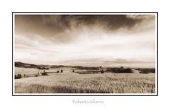P6010030 (Roberto Silverio) Tags: landscape nature campagna italy loveitaly light yellow paesaggio photography robertosilveriophoto