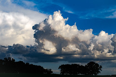 Storm Clouds (Sonia Argenio Photography) Tags: beforethestorm farm flickr flickrsoniasgallery flickrsoniaargenio ocala ocalafl outdoors soniaargenio trees blue bluesky bysoniaa clouds cloudy distant field florida rain sky storm stormclouds