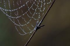 ckuchem-2 (christine_kuchem) Tags: nahaufnahme regen regentropfen spinnennetz tropfen wasser wassertropfen romantisch