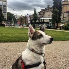 Cheltenham (Jainbow) Tags: imperialgardens cheltenham holiday 2016 jainbow lina collie cross dog rescue