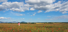 playing in a field of poppies (Wilma van Oorschot) Tags: wilmavanoorschot angelphotography olympusem5 olumpusomdem5 mzuikodigitaled1250mm13563 poppies clouds outdoor nature france plateaudevalensole provence red flowers landscape summer sky