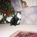 Bhaji (and Daisy!), Christmas 1999