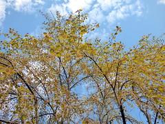 (mahler9) Tags: sky plants tree clouds spring may arboretum jaym 2015 mahler9