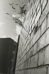 LifeWillFindAWay (rowandavenport) Tags: street blackandwhite film fa nikonfa