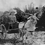 Two Clark children with an impressive goat on their way to Sunday School in a goatdrawn buggy Redland Bay Queensland 1900-1910 thumbnail